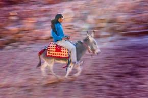 Petra-donkey-1