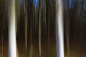 Forest-acid-1