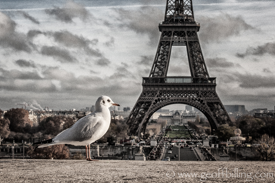 Eiffel_tower_seagull