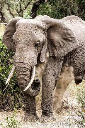 Serengeti-130-Edit
