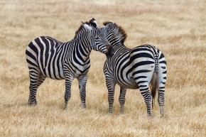 Serengeti-284-Edit